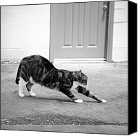 Black And White Cats Canvas Prints - Stretch Canvas Print by Glennis Siverson