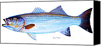 Shop Painting Canvas Prints - Striped Bass Canvas Print by Carey Chen