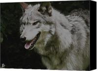 Wolf Photo Shot Canvas Prints - Strong Wolf Canvas Print by Debra     Vatalaro