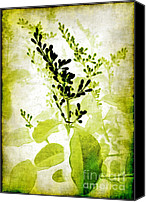 Judi Bagwell Canvas Prints - Study in Green Canvas Print by Judi Bagwell