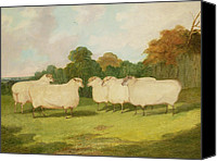Studies Canvas Prints - Study of Sheep in a Landscape   Canvas Print by Richard Whitford