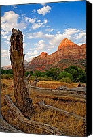 National Parks Canvas Prints - Stumped at Zion Canvas Print by Peter Tellone