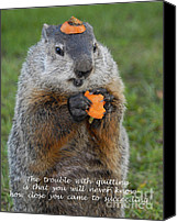 Groundhog Canvas Prints - Succeeding Canvas Print by Paul W Faust -  Impressions of Light