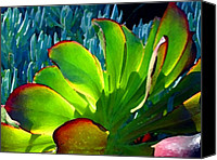 Pond Canvas Prints - Succulent Backlit on Blue 5 Canvas Print by Amy Vangsgard