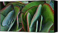Red And Green Canvas Prints - Succulent Canvas Print by Mary Machare