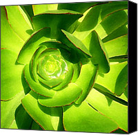 Western Digital Art Canvas Prints - Succulent Square Close Up 5 Canvas Print by Amy Vangsgard