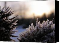 Winter Canvas Prints - Sugar crystals Canvas Print by Scott Hovind