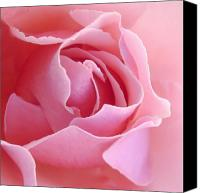 Rose Photo Canvas Prints - Sugar of Rose Canvas Print by Jacqueline Migell