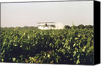 Bi Planes Canvas Prints - Sulfur Dusting Of Grape Vines By Air Canvas Print by Everett
