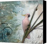 Parrots Canvas Prints - Sulphur-Crested Cockatoo and Beetle Canvas Print by Lesley Smitheringale