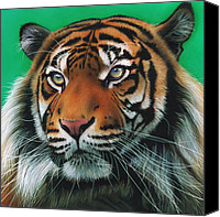Jurek Zamoyski Canvas Prints - Sumatran Tiger Canvas Print by Jurek Zamoyski