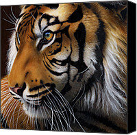 Jurek Zamoyski Canvas Prints - Sumatran Tiger Profile Canvas Print by Jurek Zamoyski