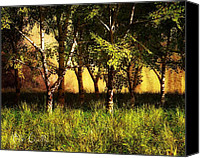 Summer Photo Canvas Prints - Summer Birch Trees Canvas Print by Bob Orsillo