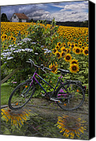 Rural Scenes Canvas Prints - Summer Cycling Canvas Print by Debra and Dave Vanderlaan