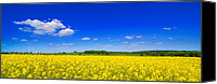 Rapeseed Canvas Prints - Summer Field Canvas Print by Christopher Elwell and Amanda Haselock