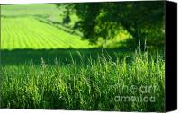 Grow Digital Art Canvas Prints - Summer fields of green Canvas Print by Sandra Cunningham