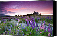 Church Photo Canvas Prints - Summer Lupins At Sunrise At Lake Tekapo, Nz Canvas Print by Atan Chua