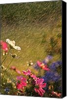 Damp Canvas Prints - Summer Rain Canvas Print by Darren Fisher