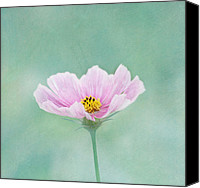 Beautiful Pink Flowers Canvas Prints - Summers Song Canvas Print by Kim Hojnacki