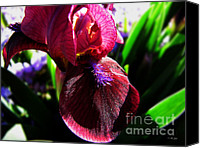 Selective Color Mixed Media Canvas Prints - Sun Glistening Iris Canvas Print by Ms Judi