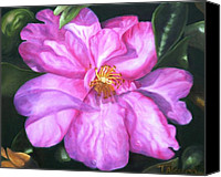 Camelia Canvas Prints - Sun-kissed Camelia Canvas Print by Therese Alcorn