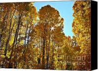 Sierra Canvas Prints - Sun Star Behind Sierra Nevada Aspen Trees Canvas Print by Scott McGuire