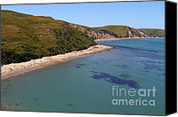 Headlands Canvas Prints - Sunbathing Elephant Seals Along A Beach At Point Reyes California . 7D16058 Canvas Print by Wingsdomain Art and Photography