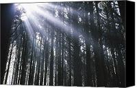 Selection Canvas Prints - Sunbeams Through Silhouetted Pine Trees Canvas Print by Natural Selection Craig Tuttle