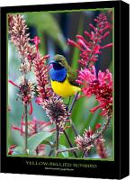 Flora Canvas Prints - Sunbird Canvas Print by Holly Kempe