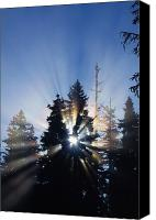 Selection Canvas Prints - Sunburst Through Silhouetted Pine Trees Canvas Print by Natural Selection Craig Tuttle