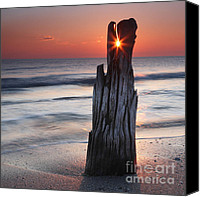 Log Canvas Prints - Suncrack Canvas Print by Evgeni Dinev