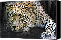 Animals Digital Art Canvas Prints - Sundari Canvas Print by Big Cat Rescue