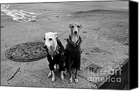 Whippet Canvas Prints - Sunday Best Canvas Print by Dean Harte
