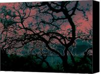 Trees Canvas Prints - Sundown Canvas Print by Tim Tanis