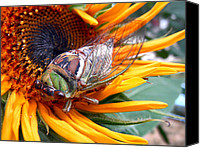 Jon Baldwin Art Canvas Prints - Sunflower and Insect  Canvas Print by Jon Baldwin  Art