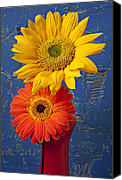 Chrysanthemums  Canvas Prints - Sunflower and Mum Canvas Print by Garry Gay