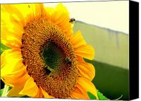 Amy Bradley Canvas Prints - Sunflower Bees Canvas Print by Amy Bradley
