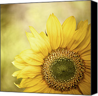 Yellow Flower Canvas Prints - Sunflower Blossom With Bokeh Background Canvas Print by Elisabeth Schmitt