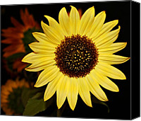 Oregon Art Canvas Prints - Sunflower Canvas Print by Cathie Tyler