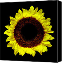Flower Works Canvas Prints - Sunflower. Canvas Print by Chris  Kusik