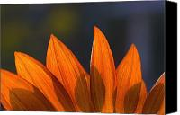 Still Life Tapestries Textiles Special Promotions - Sunflower Close-up Canvas Print by Carson Ganci
