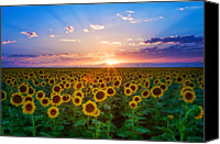 No People Canvas Prints - Sunflower Canvas Print by Hansrico Photography