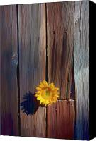 Icons Canvas Prints - Sunflower in barn wood Canvas Print by Garry Gay