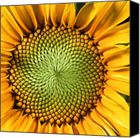 Yellow Flower Canvas Prints - Sunflower Canvas Print by John Foxx