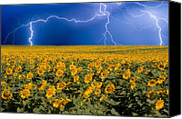Nature Tapestries Textiles Special Promotions - Sunflower Lightning Field  Canvas Print by James Bo Insogna