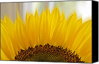 Mariola Szeliga Canvas Prints - Sunflower Canvas Print by Mariola Szeliga