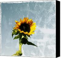 Sunflowers Canvas Prints - Sunflower of Grunge Canvas Print by Cathie Tyler