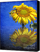 Close Up Mixed Media Canvas Prints - Sunflower Reflection Canvas Print by Andee Photography