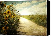 Fine Art Print Photo Canvas Prints - Sunflower Road Canvas Print by Andrea Hazel Ihlefeld