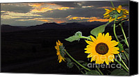 Eric Dee Canvas Prints - Sunflower Sunset Canvas Print by Eric Dee